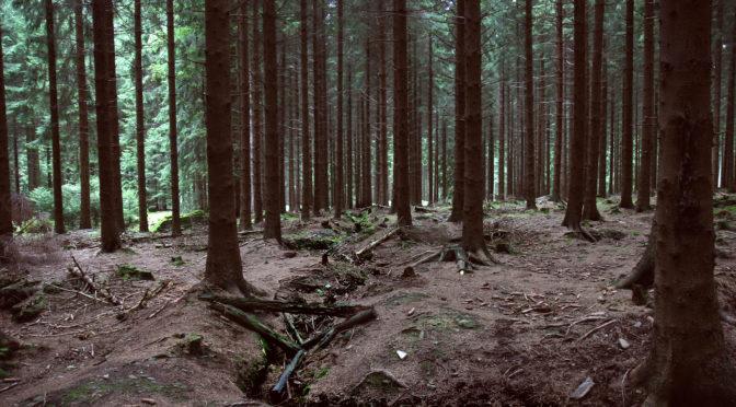 """Die """"Schlacht im Hürtgenwald"""" und ihre Erinnerungskultur"""
